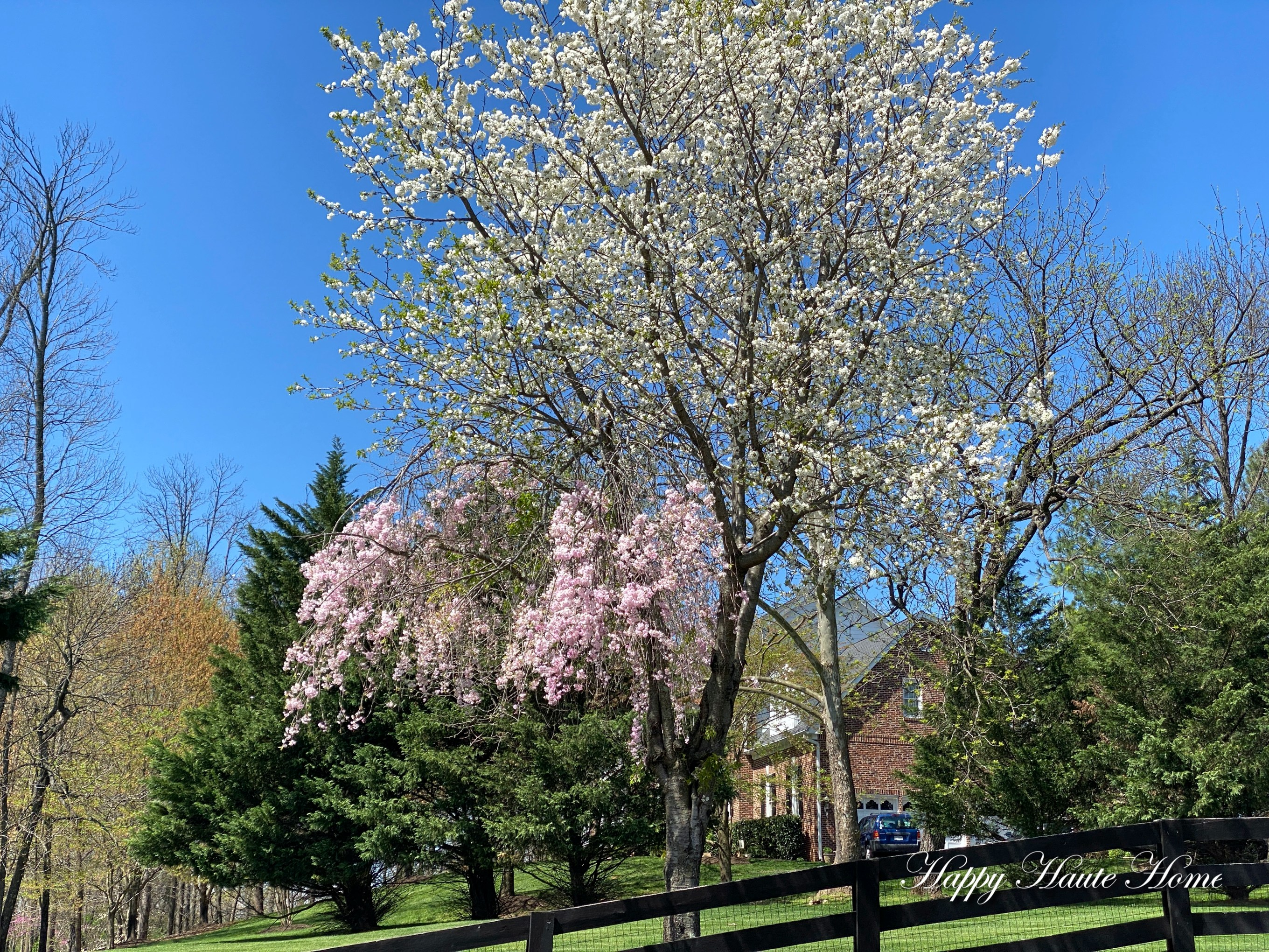 Why A Weeping Cherry Tree No Longer Weeps Or Only Partially Weeps